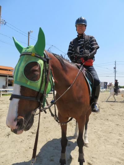 おじさんが乗馬ライセンスに挑戦