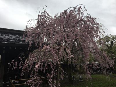 桜を追って29.30