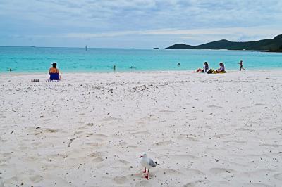 海と大地を満喫!6泊9日 オーストラリア旅行 ~ハミルトン島3日目、ケアンズでディナー~