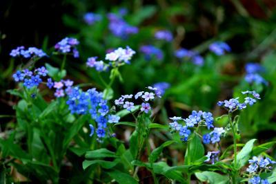◆福島・四季・彩々・Part,83・惜春の候