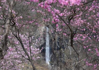 奥日光 中禅寺湖畔 アカヤシオ景色と夏鳥を探す一日