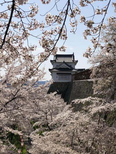 2019年岡山県 津山城の桜