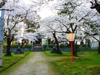 鶴岡公園の桜と至道館
