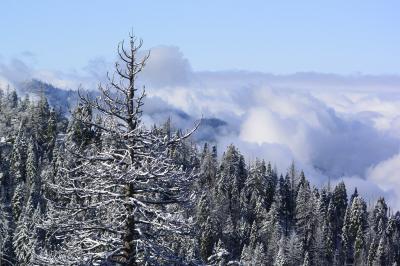 白銀の春のセコイア国立公園