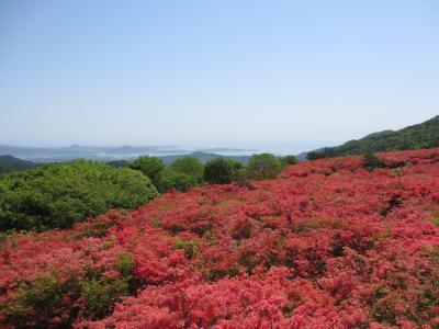徳仙丈山のツツジとポケモン列車