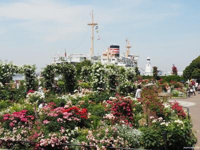 横浜ローズウィーク@山下公園~港の見える丘公園