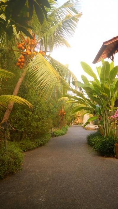バリ島に女性一人で一ヶ月滞在してみました!!ウブドのgreen field hotel 編