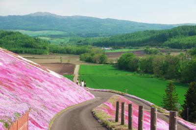 東藻琴の芝桜公園へ