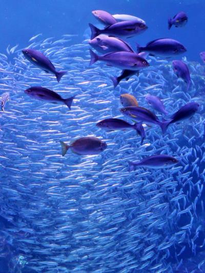 梅小路公園-9  京都水族館a 京の川・京の海 海獣/ペンギンも ☆水と共につながる-いのち