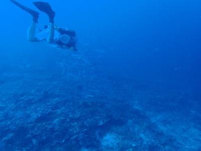 Apo reef と busuanga ダイビングクルーズ