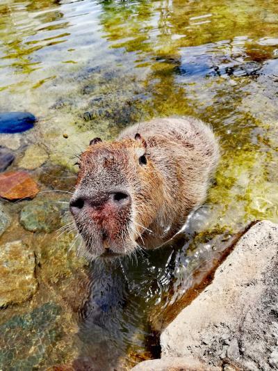 動物に温泉にパン、癒しスポットいっぱいの那須旅