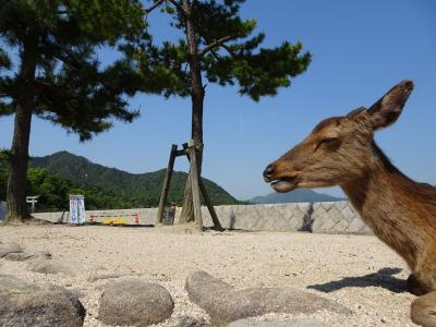 広島ひとり旅 神社と登山と時々鹿さん