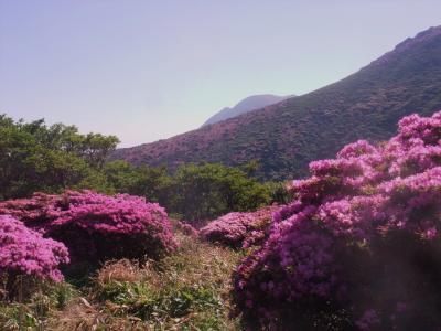 6月の九州・ミヤマキリシマに会いに九重山へ