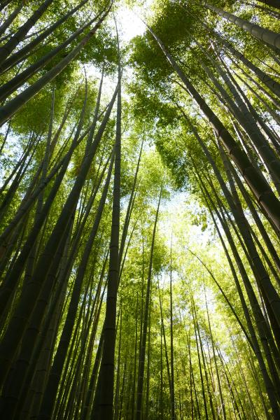 新緑の候、鎌倉を歩く ー 杉本寺、旧華頂宮邸、報国寺そして旧一条恵観山荘を訪ねて