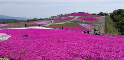 天空の花回廊-茶臼山の芝桜を満喫