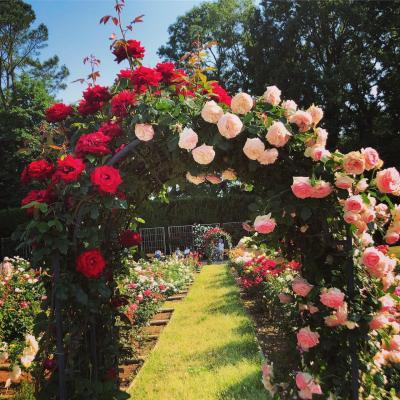 満開の薔薇園  東京都調布市 神代植物公園