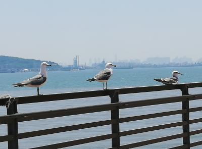 仁川空港から船と京仁線でソウルへ (1)