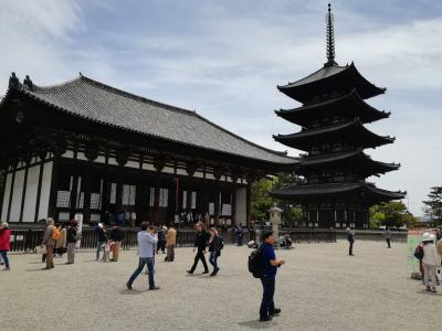 奈良の興福寺と奈良公園観光。人多すぎです。