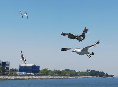 仁川空港から船と京仁線でソウルへ (2)
