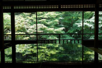 京都訪問2019(洛北の青モミジ:瑠璃光院、蓮華寺、大原三千院)