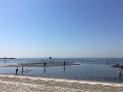 船橋三番瀬海浜公園での潮干狩り