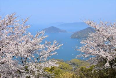 紫雲出山の桜が満開 ~桜色に染まる山頂と碧い瀬戸内海の絶景2019~(香川)