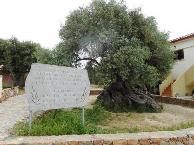 5月のギリシャは野草の花満開だった クレタ島