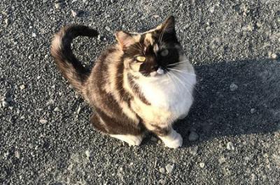 西伊豆釣行 田子港の猫たち ミケちゃんはどこへ?