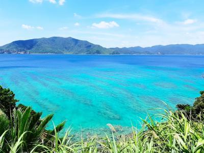 奄美大島に初上陸