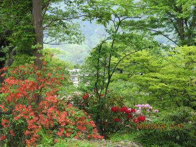 令和元年も箱根温泉旅行をしました⑧箱根強羅公園を訪問・・・1)正門より噴水池まで