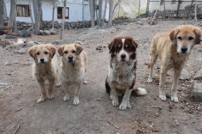 ラダック旅行 その4(チベット仏教と野良犬たち)