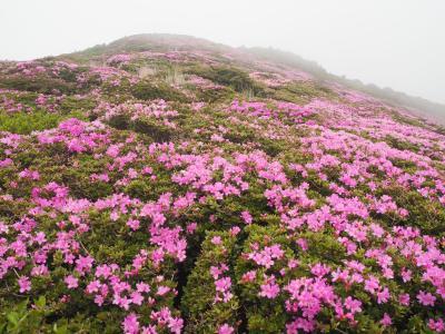 2泊3日 九重ミヤマキリシマ登山と温泉三昧の旅
