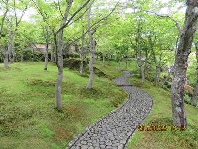 令和元年も箱根温泉旅行をしました⑩箱根美術館訪問・・・1)素晴らしい苔庭