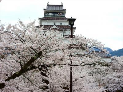 会津若松の桜