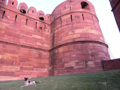 インドでゴールデンウイーク4泊5日***(3)世界遺産 アグラ城