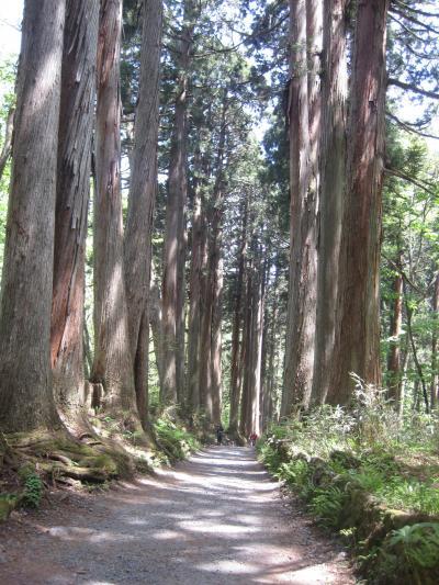 初夏の戸隠神社