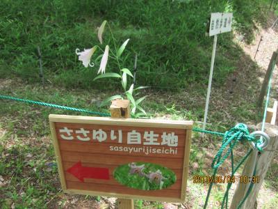 御嵩から新可児までのハイキング (中山道御嶽宿と可憐な花ささゆりコース) と 明智城址