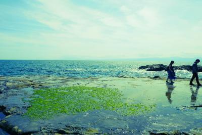 ★愛犬とお出かけ♪江の島に生しらす丼を食べに★