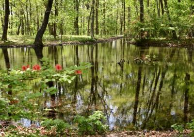 緑・花・鳥 赤城自然園で のんびり森林セラピー歩き
