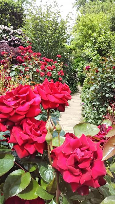 薔薇満開のイングリッシュガーデン