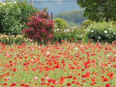 春から夏へ・・・ 和泉リサイクル公園の花