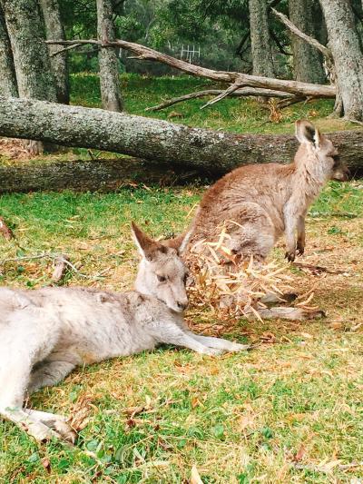 vivid sidneyのオーストラリアへ3日目