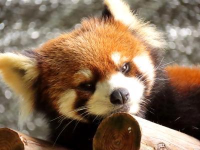 池田動物園 陸君、大地君、きなこちゃん、久しぶり!! 鹿児島に向かう道中に少しだけ池田ZOO訪問