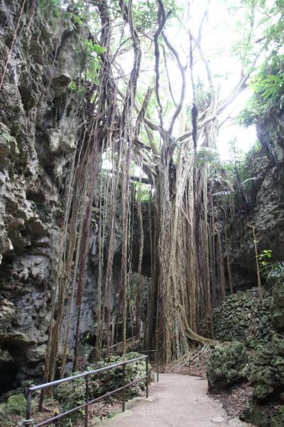 数十万年もの時が創りあげた鍾乳洞が崩壊してできた谷間「ガンガラーの谷」ガイドツアー
