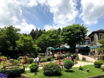 箱根ガラスの森美術館と箱根湿性花園で青いケシの花をみる