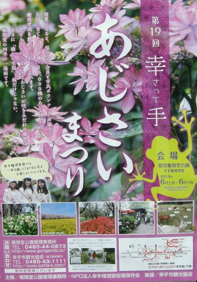 我家の庭の紫陽花が咲き始めたので権現堂公園の紫陽花を観に・・・