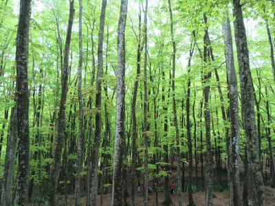 春の新潟2~清津峡、美人林、星峠の棚田、松之山温泉