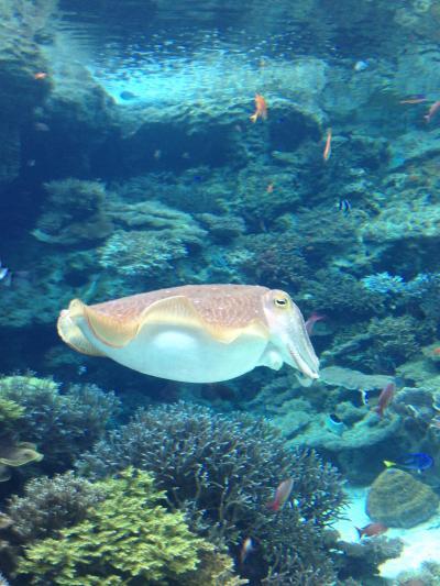 オリオンモトブ泊で美ら海水族館~古宇利島・備瀬を楽しむ旅 2日目