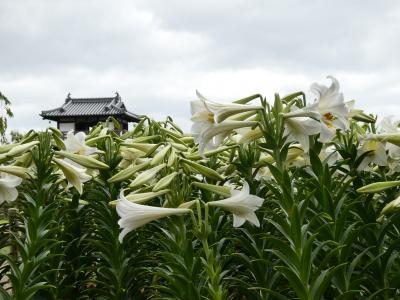 週末ちょこっと散歩 池田城跡公園(初夏のお花見)