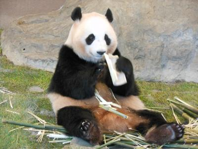 南紀白浜!パンダに会いに行ってきました!(2日目:アドベンチャーワールド)
